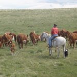 What it takes to be a rancher